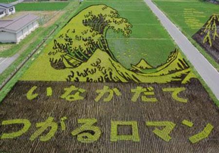 disegno nel riso