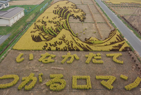 raccolto del riso