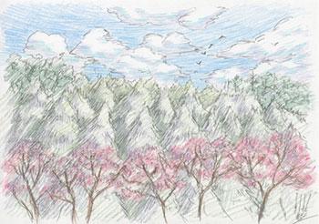 concorso disegno foresta naruto giappone